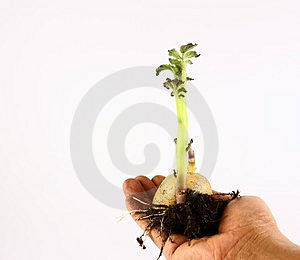 Seeds Growing Royalty Free Stock Photos - Image: 2103998