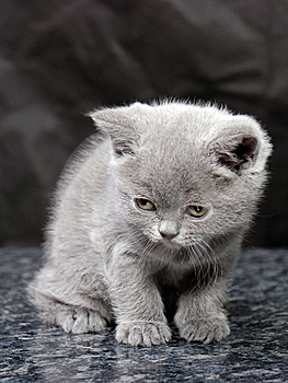 Kitten26 Stock Image