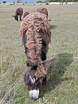 Dreadlocks Donkey Royalty Free Stock Photography - Image: 21008457