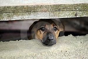 Puppy Stock Photo - Image: 21009340