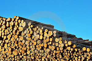 Heap Of Timber Logs Stock Photography - Image: 21014312