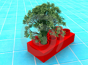 Tree In A Cube Stock Photography - Image: 21016362
