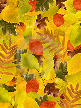 Different Autumn Leaves Background Royalty Free Stock Image - Image: 21018616
