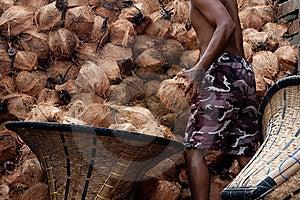 Move Coconut Stock Image - Image: 21037851