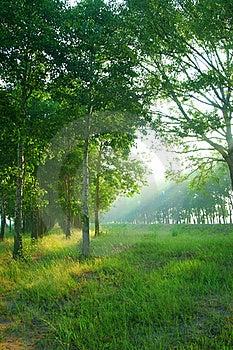 Sun Beams Through Trees Royalty Free Stock Photo - Image: 21049805