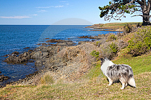 Dog At Sea Royalty Free Stock Photo - Image: 21062165