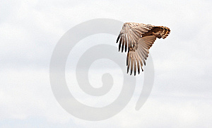 Eagle Flies Free In The African Sky Stock Images - Image: 21062214