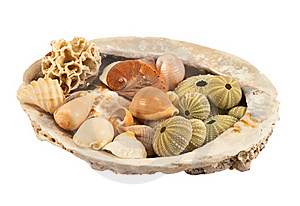 Collection Of Sea Shells Stock Photo - Image: 21064790