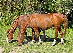 Horses Stock Photo - Image: 21067980