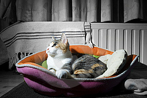 Cat In A Basket 2 Stock Photography - Image: 21075102