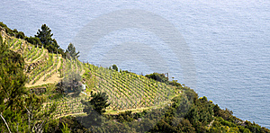 Vineyard Stock Image - Image: 21089631