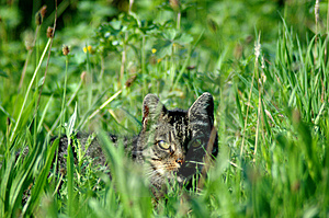 Striped Cat Stock Images - Image: 2119454