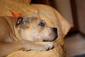 Sad Dog Royalty Free Stock Image - Image: 21100856