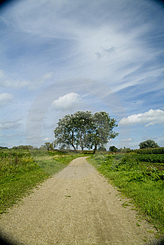 Tree And Clouds 2 Royalty Free Stock Images - Image: 21104959