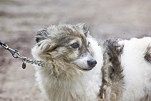 Cute Little Dog Stock Photos - Image: 21105643