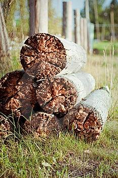 Rotten Wood Stock Image - Image: 21107061