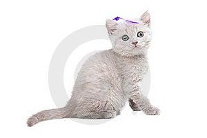 Pale-yellow British Kitten Royalty Free Stock Photo - Image: 21108055