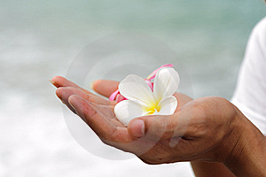 Spa Flower Hand Ignore Stock Photos - Image: 21108313