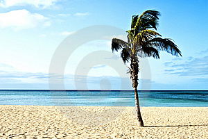 Beach With Palm Trees Stock Image - Image: 21108561
