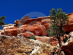 Trees On The Cliff Stock Photography - Image: 21110782