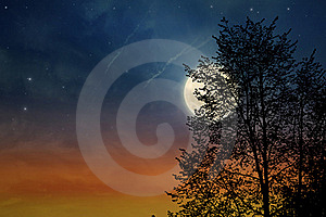 Sunset Tree Royalty Free Stock Photos - Image: 21111488