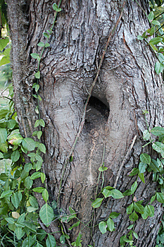 Odd Tree Royalty Free Stock Image - Image: 21117276