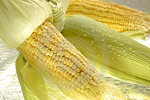 Maize Stock Images - Image: 21140014