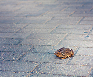 Toad Stock Photography - Image: 21142132