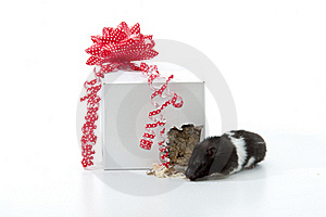 Gift On The Run Royalty Free Stock Photos - Image: 21142478