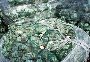 Shells Royalty Free Stock Image - Image: 21148466
