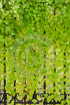 Leaves  leaves  on the  baluster Stock Image