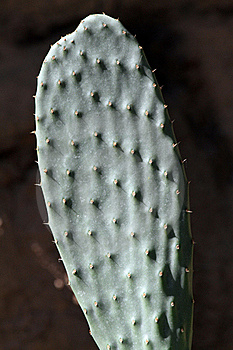 Cactus Stock Images - Image: 21153634