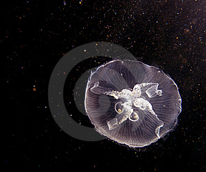 Jellyfish On The High Seas Stock Images - Image: 21159874