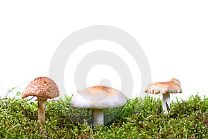Three Toadstools In Green Moss Stock Photos - Image: 21164153