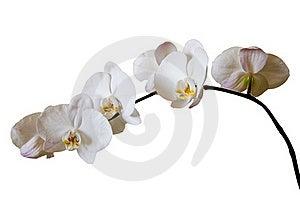 Flowers Purple Orchids Stock Photo - Image: 21166060