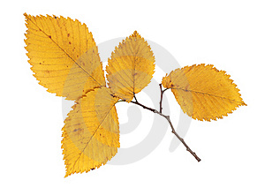 Trees With Leaves Royalty Free Stock Photography - Image: 21167117