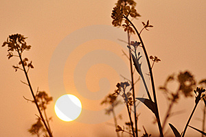 The Sunset And Wild Flowers Royalty Free Stock Image - Image: 21169616