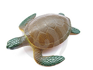 Turtle Royalty Free Stock Photography - Image: 21182327