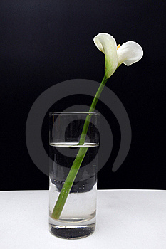 Flower Royalty Free Stock Image - Image: 21189446