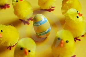Easter Chicks & Egg Stock Photography