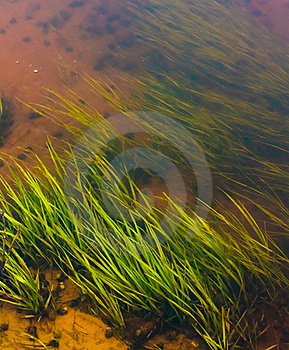 Seaweed Stock Photo - Image: 21209590