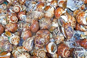Fresh Sweet Shellfish At The Market Stock Photo - Image: 21213560