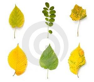 Autumn Leaves Stock Image - Image: 21219941