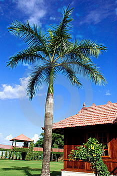 Palm Tree Royalty Free Stock Images - Image: 21221769
