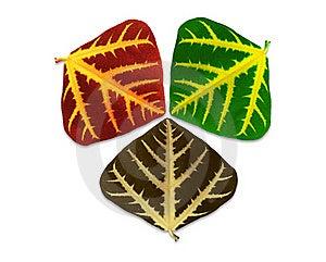 Leaves Of Three Seasons. Stock Images - Image: 21235034
