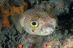 Lonely Fish Stock Photography - Image: 21260192