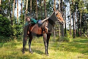 Girl On Horseback Stock Photo - Image: 21267240