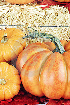 Pumpkins Stock Images - Image: 21278284
