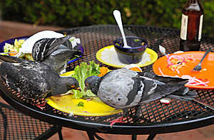 Pigeons Stock Image - Image: 21281251