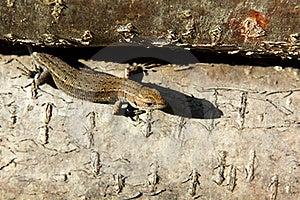 Lizard Stock Image - Image: 21288001